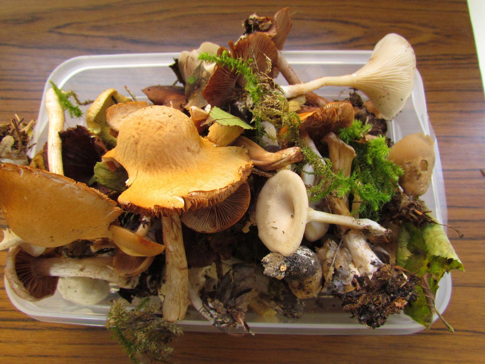 Journée champignons