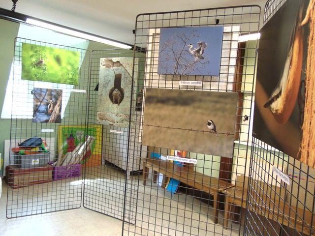 Exposition de photographies d'oiseaux