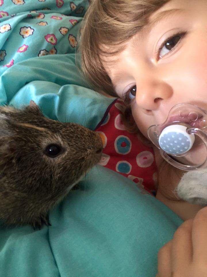 Comment choisir son premier animal..Par Lou-Anh