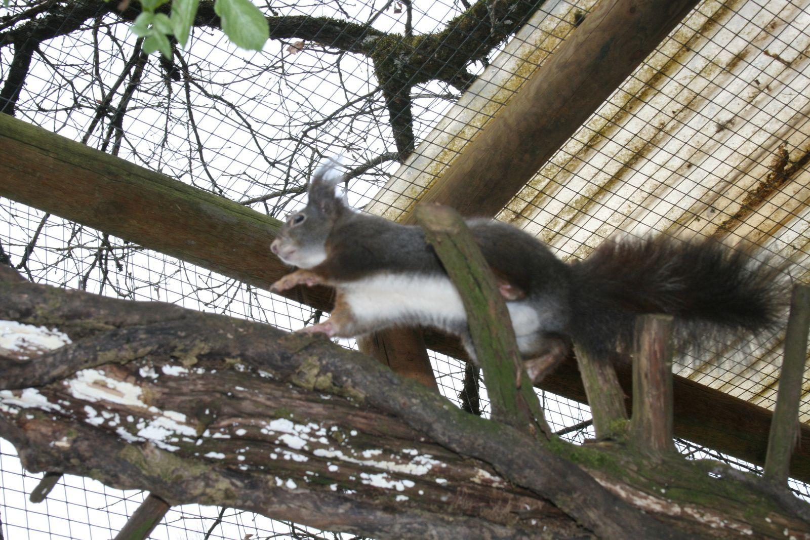 Mon incroyable journée de soigneur animalier au parc de GRAMAT