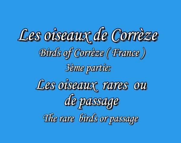 Les oiseaux de Corrèze #3