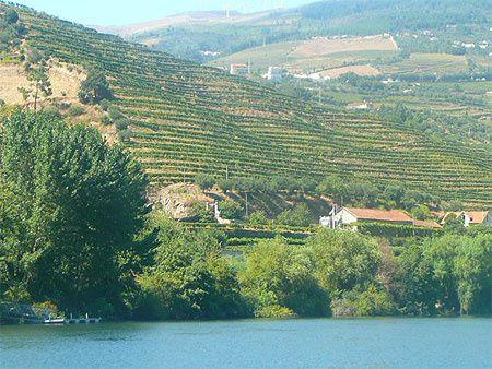 suite  du  Portugal