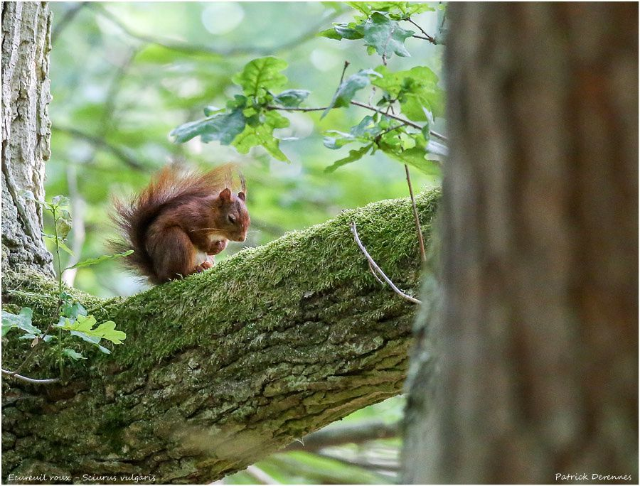 Lazy squirrel - 1