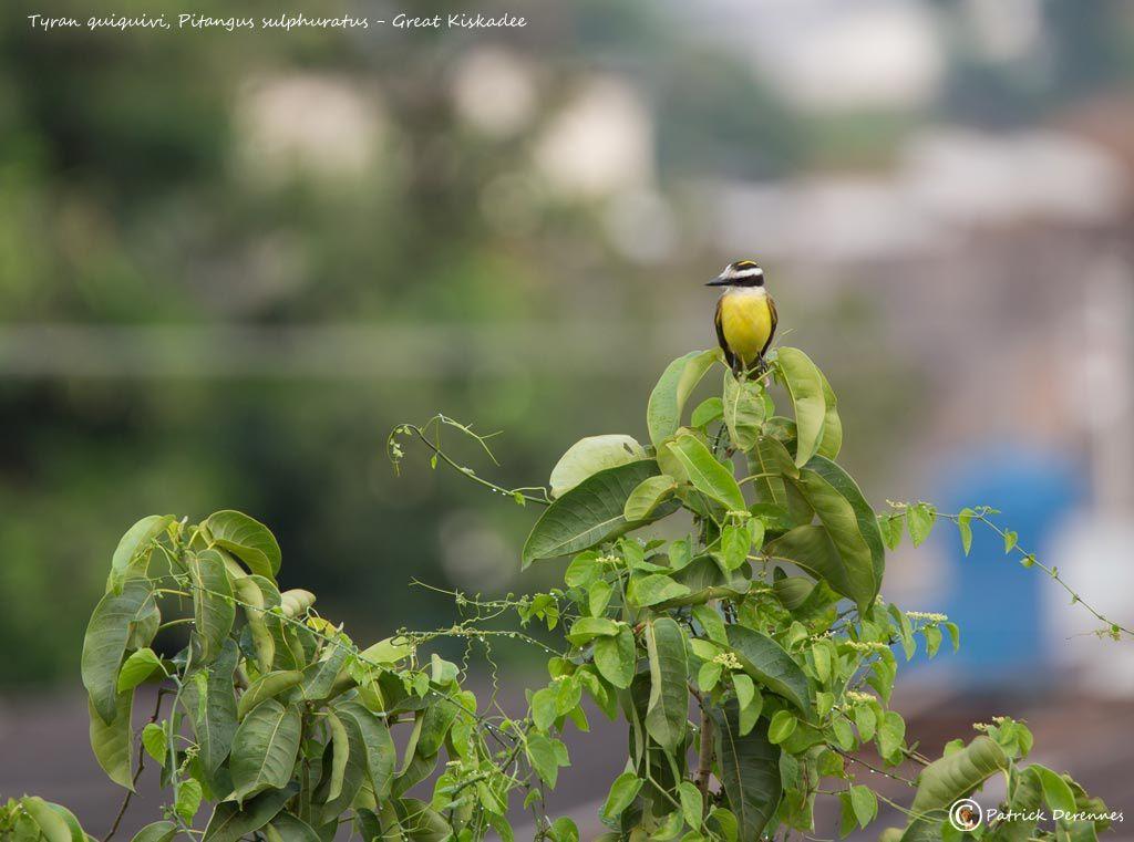 l'avant Pantanal - 2