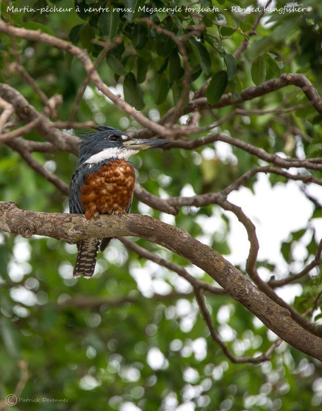 Pantanal - 10