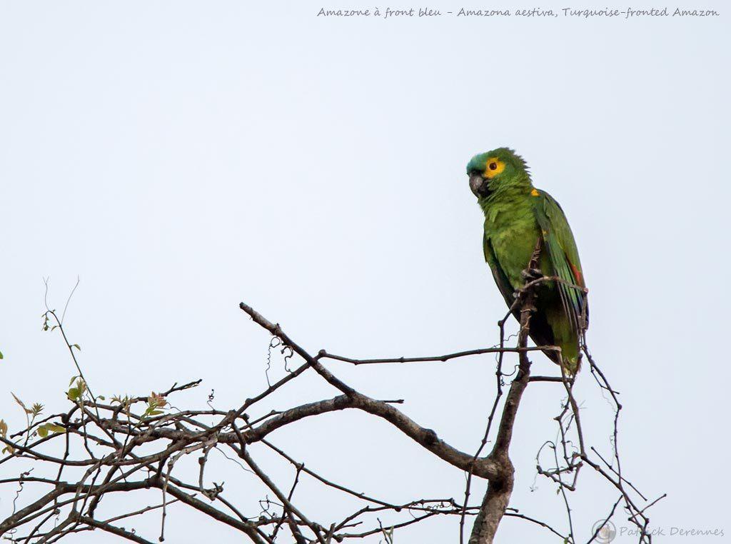 Pantanal - 35