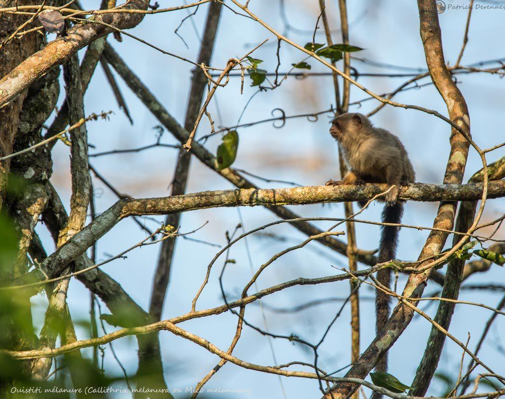 Pantanal - 49
