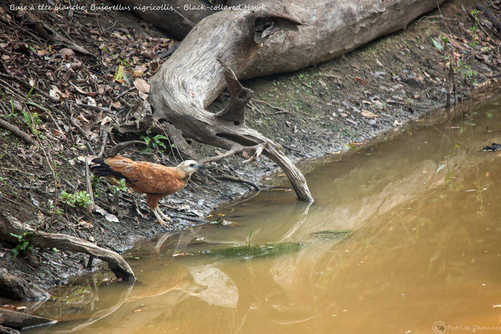 Pantanal - 26 b