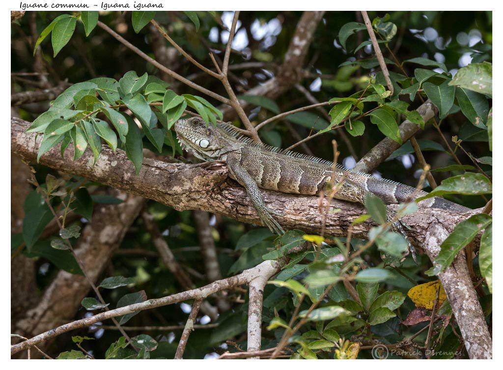 Pantanal - 86