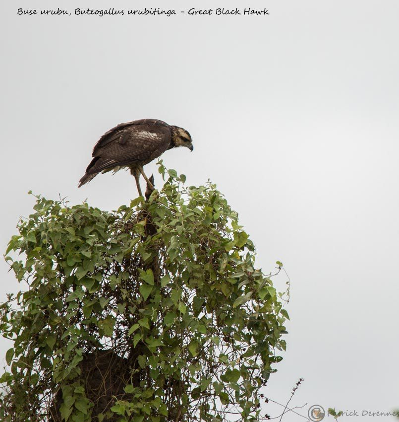 Pantanal - 34 e