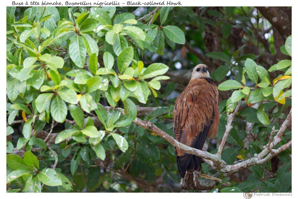 Pantanal - 26 d