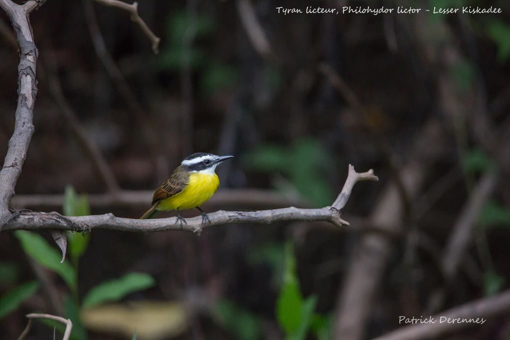 Pantanal - 98