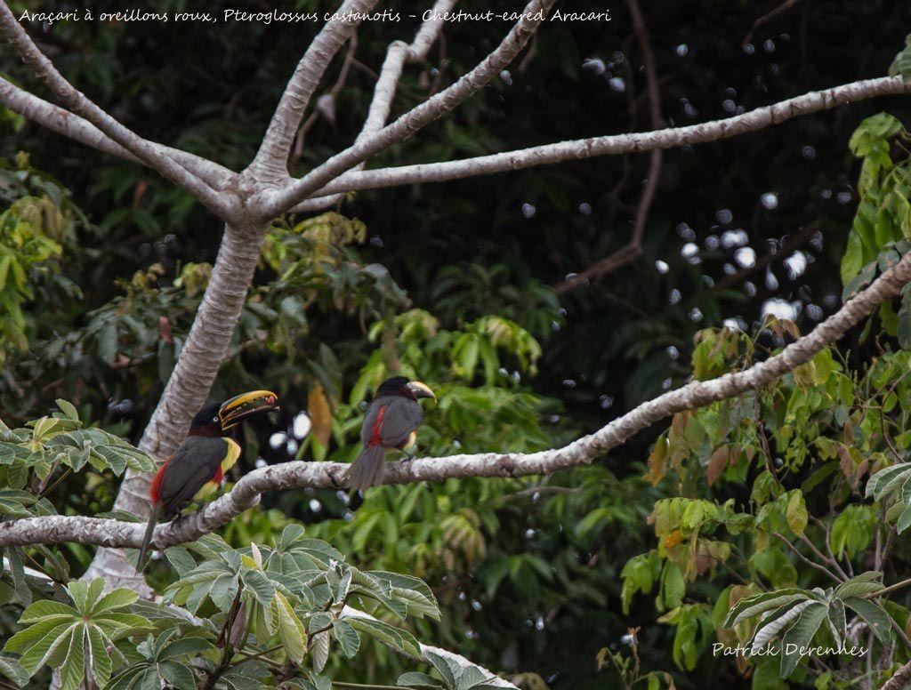 Pantanal - 100