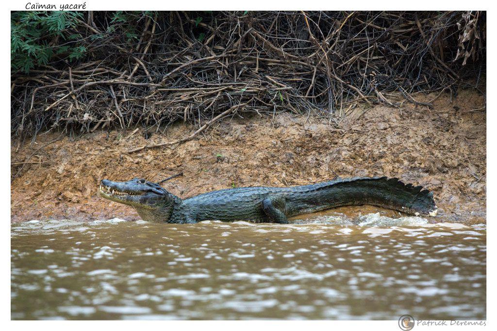 Pantanal - 30 f