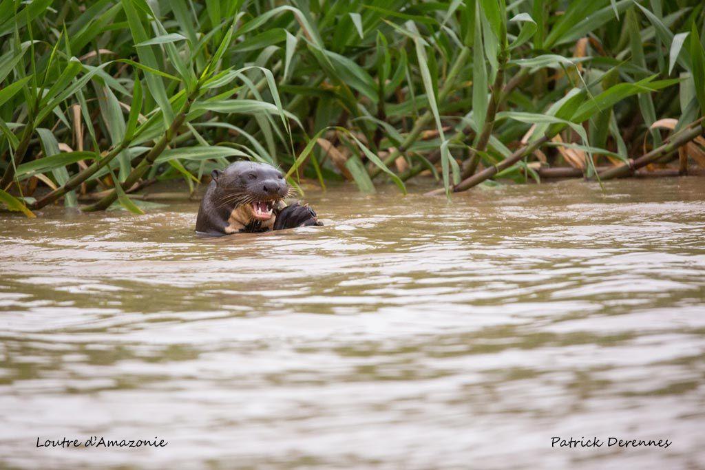 Pantanal - 77 g