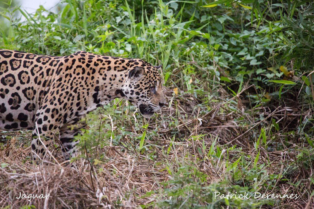 Pantanal - Objectif n°1 e