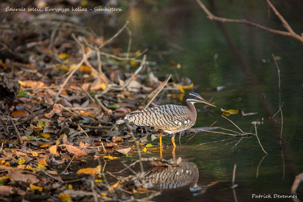 Pantanal - Caurale soleil (suite)