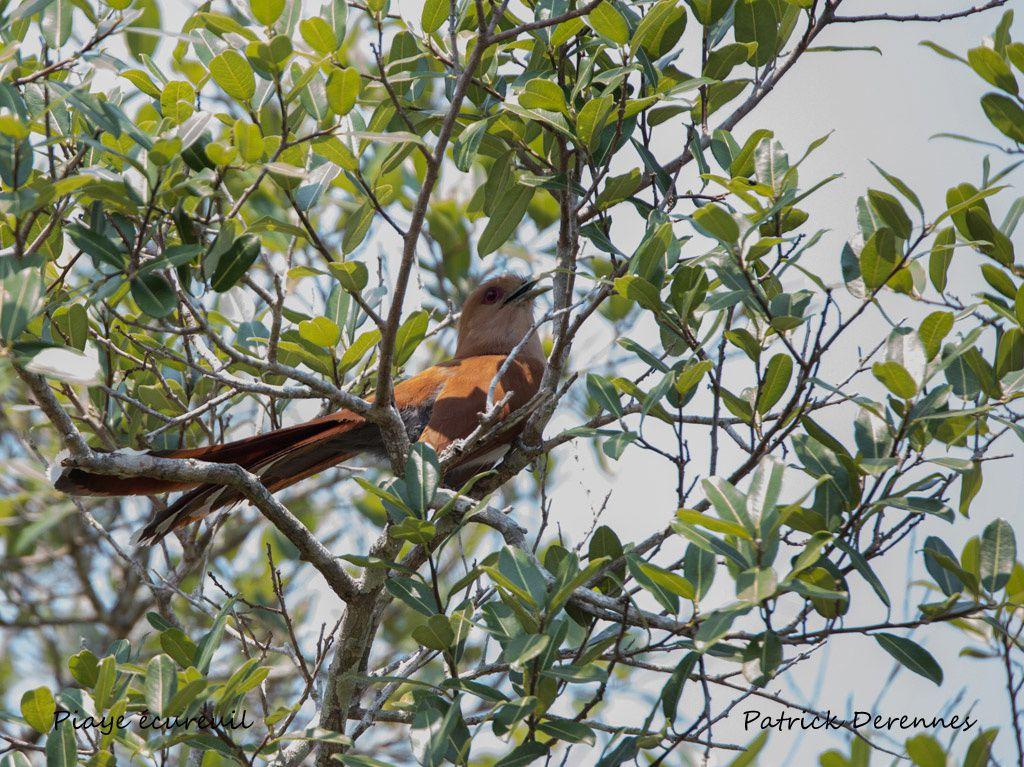 Pantanal - 109