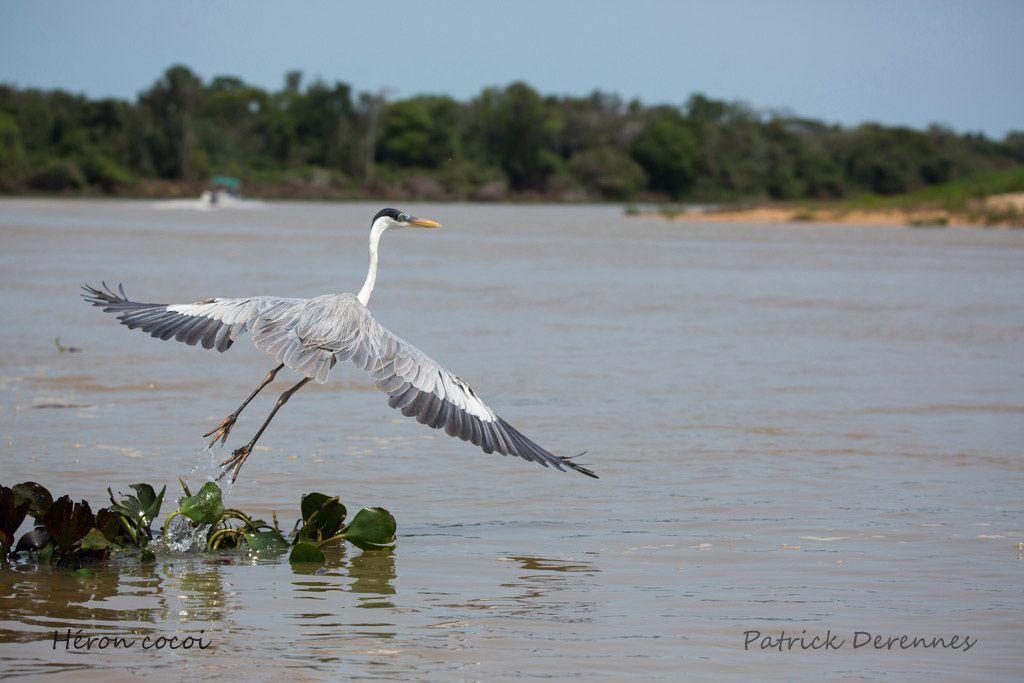 Pantanal - 68 e