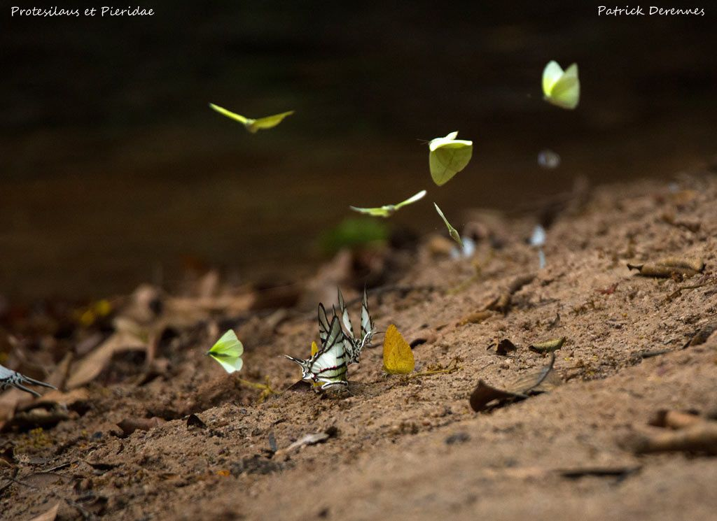 Chapada dos Guimaraes - Papillons