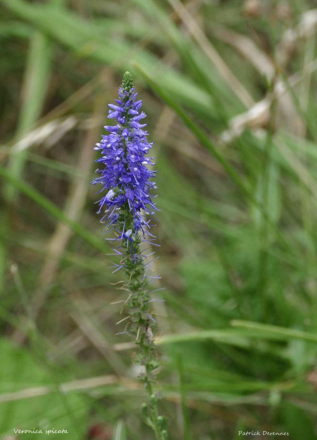 Fleurs, Lumix fz1000
