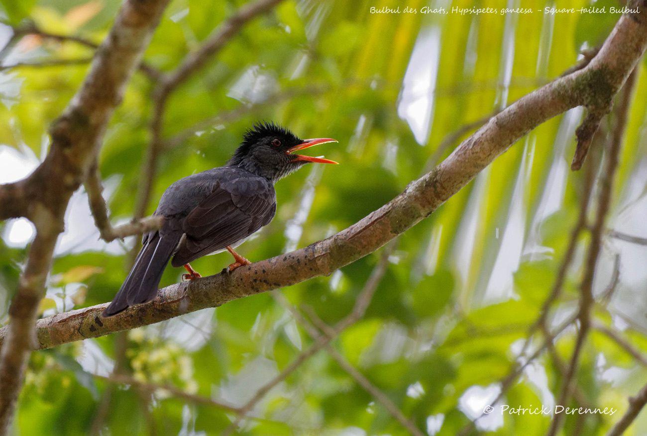 Sri Lanka - 29