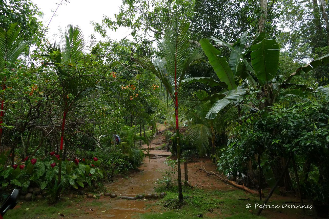 Sri Lanka - Ambiances, Kitulgala - 1