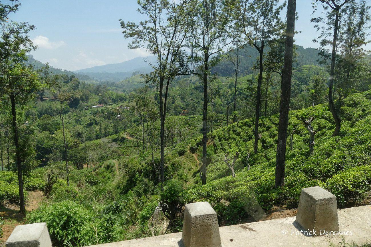 Sri Lanka - descente des hauteurs vers la côte