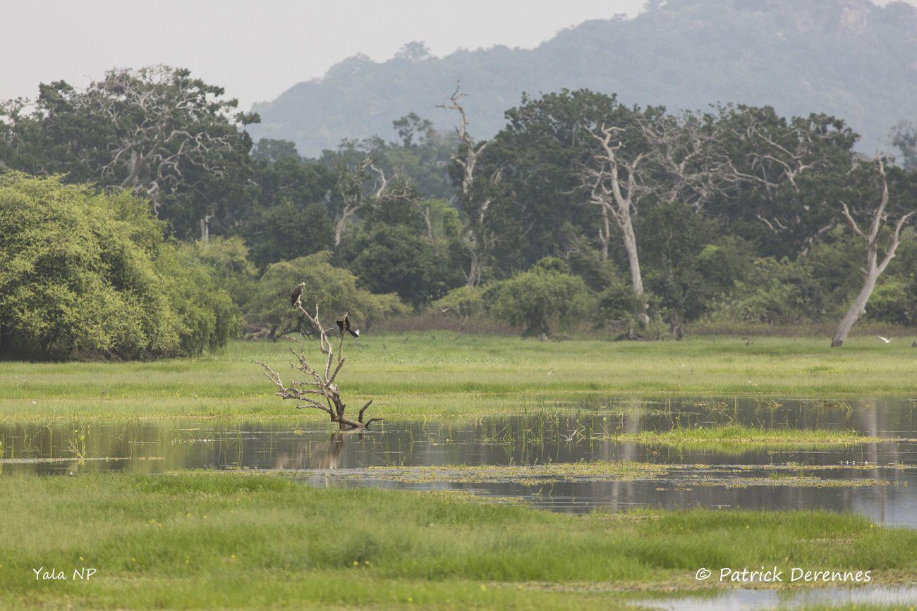 Sri Lanka - 110 et ambiances humides