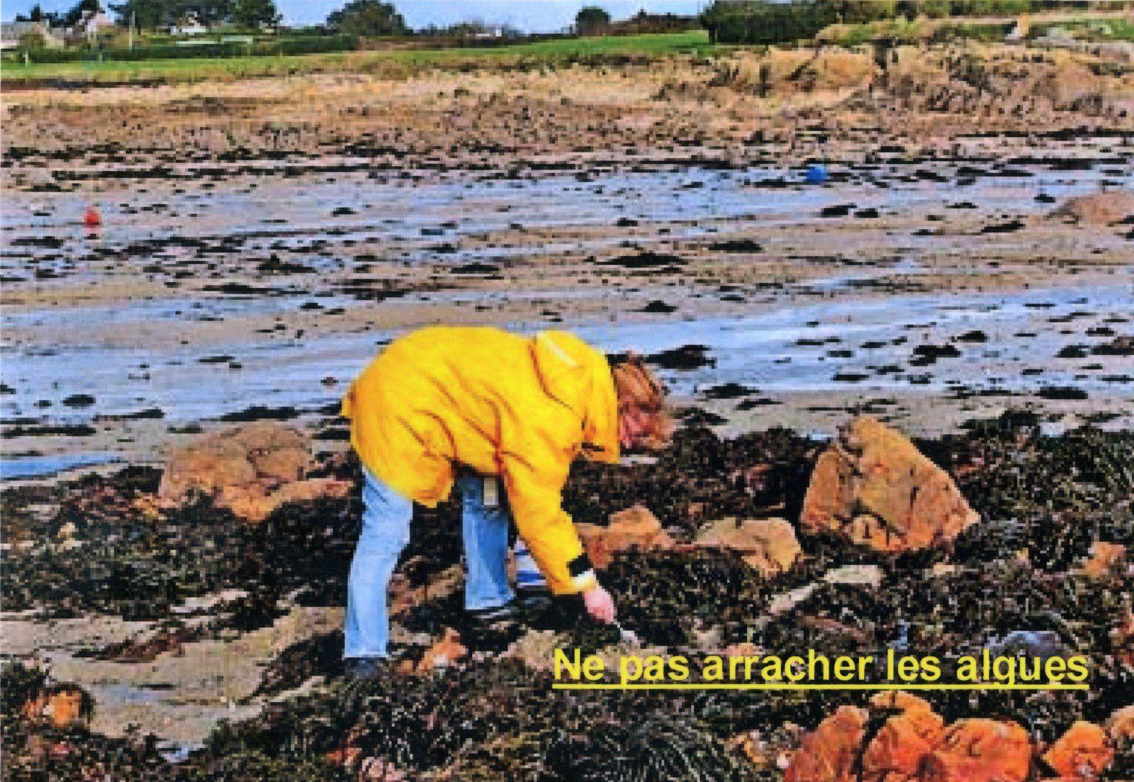 Pour un développement durable de la pêche à pied de loisir:
