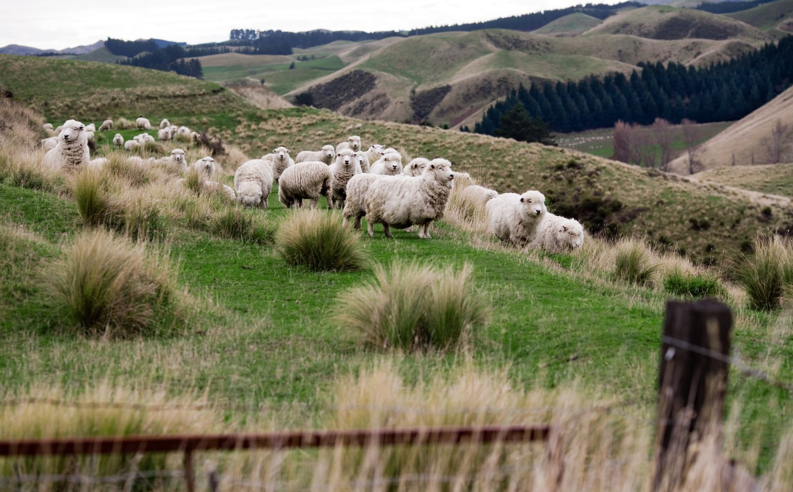 Rural New Zeland - Source: wikimedia.org