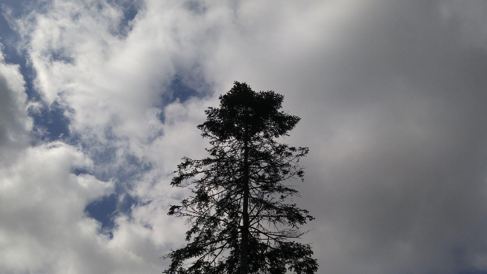 Lone Pine - April, 30th 2016  © Anne Errelis-Phillips