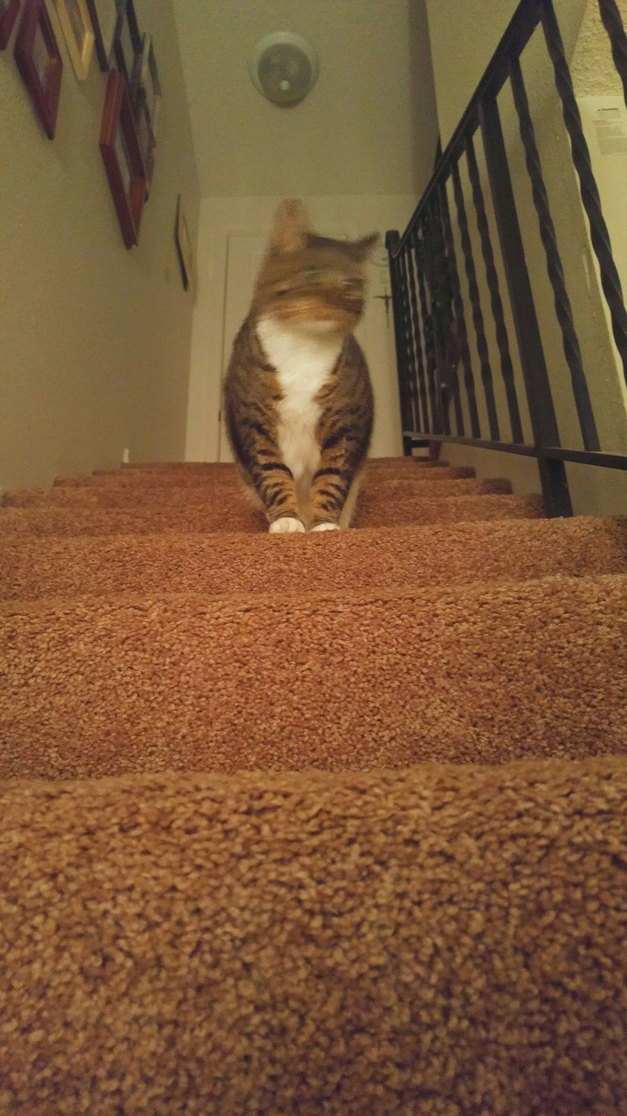 Bella on the stairs - May, 14th 2016  © Anne Errelis-Phillips