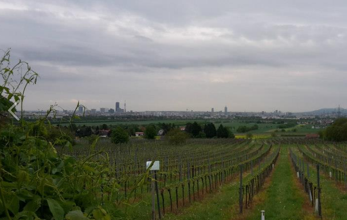 View from the heuriger's rooftop in Stammersdorf./ Vue depuis le rooftop du heuriger à Stammersdorf.