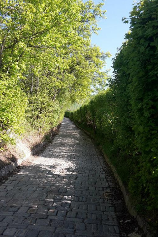 A trail leading to the vineyards in the Döbling neighborhood./ Un chemin menant aux vignobles dans le quartier de Döbling.