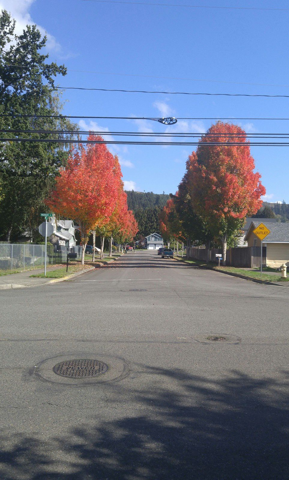 Red Trees Street - October, 10th 2016 © Anne Errelis-Phillips