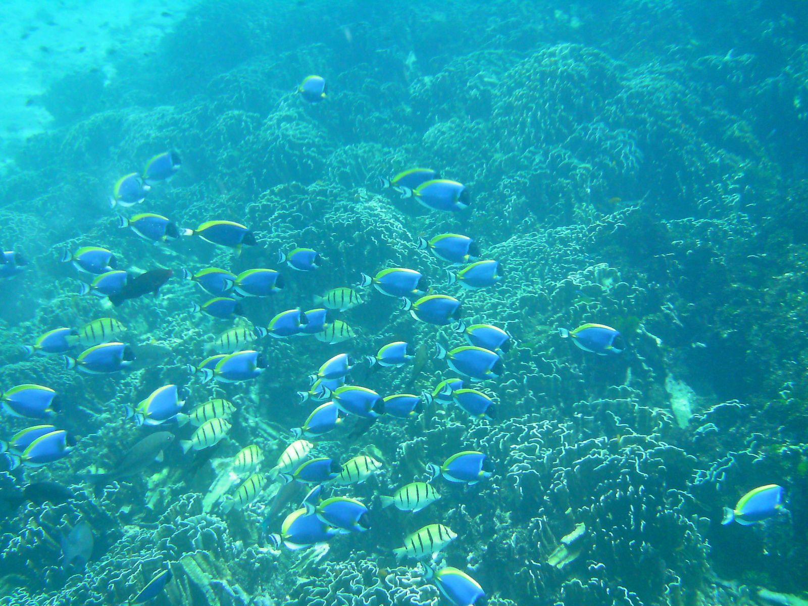 Warum Reisen? Wegen der Unterwasser-Welt!