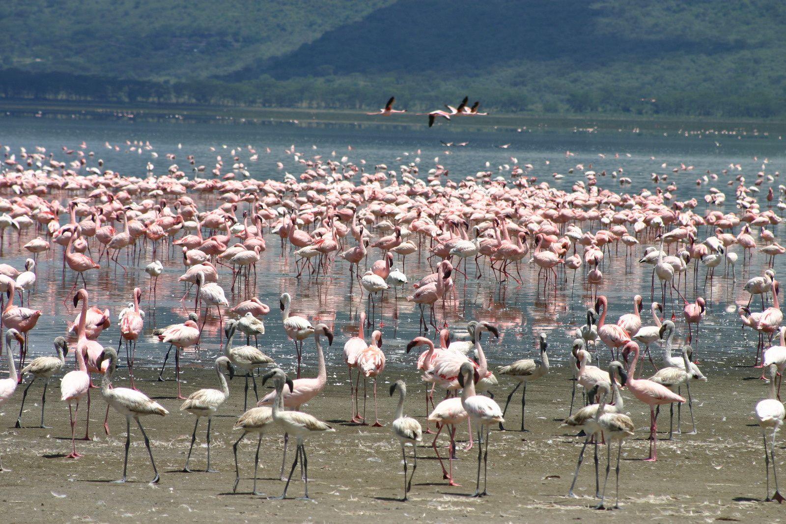Warum Reisen? Vögel beobachten ist nicht nur etwas für Ornithologen