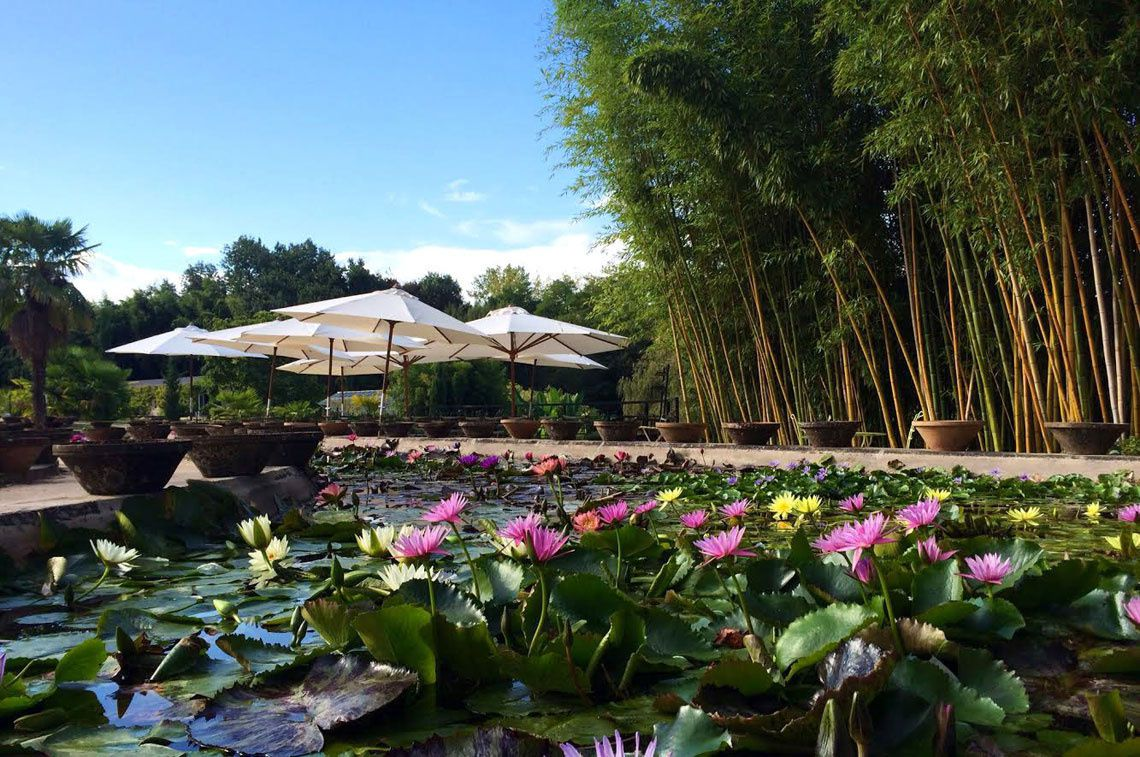 Vue du Jardin Latour - Marliac