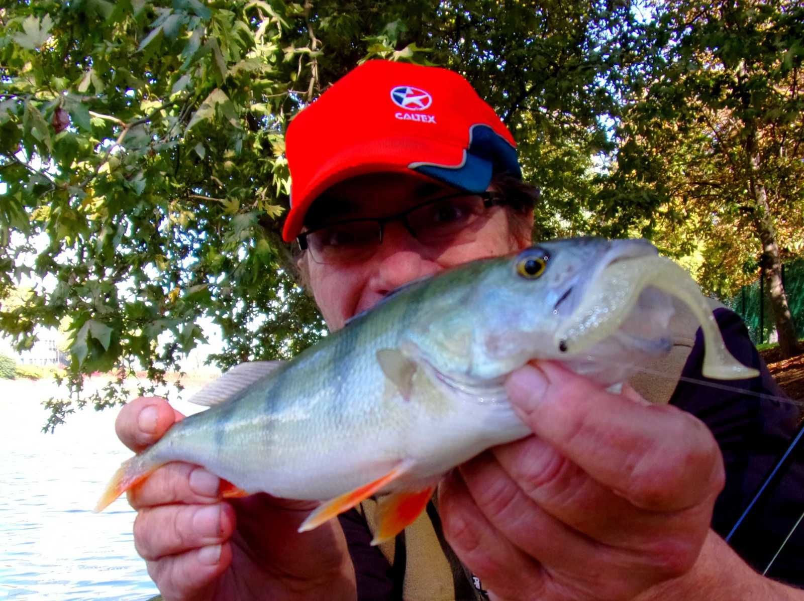 vidéo : pêche en carolina aux leurres souple !