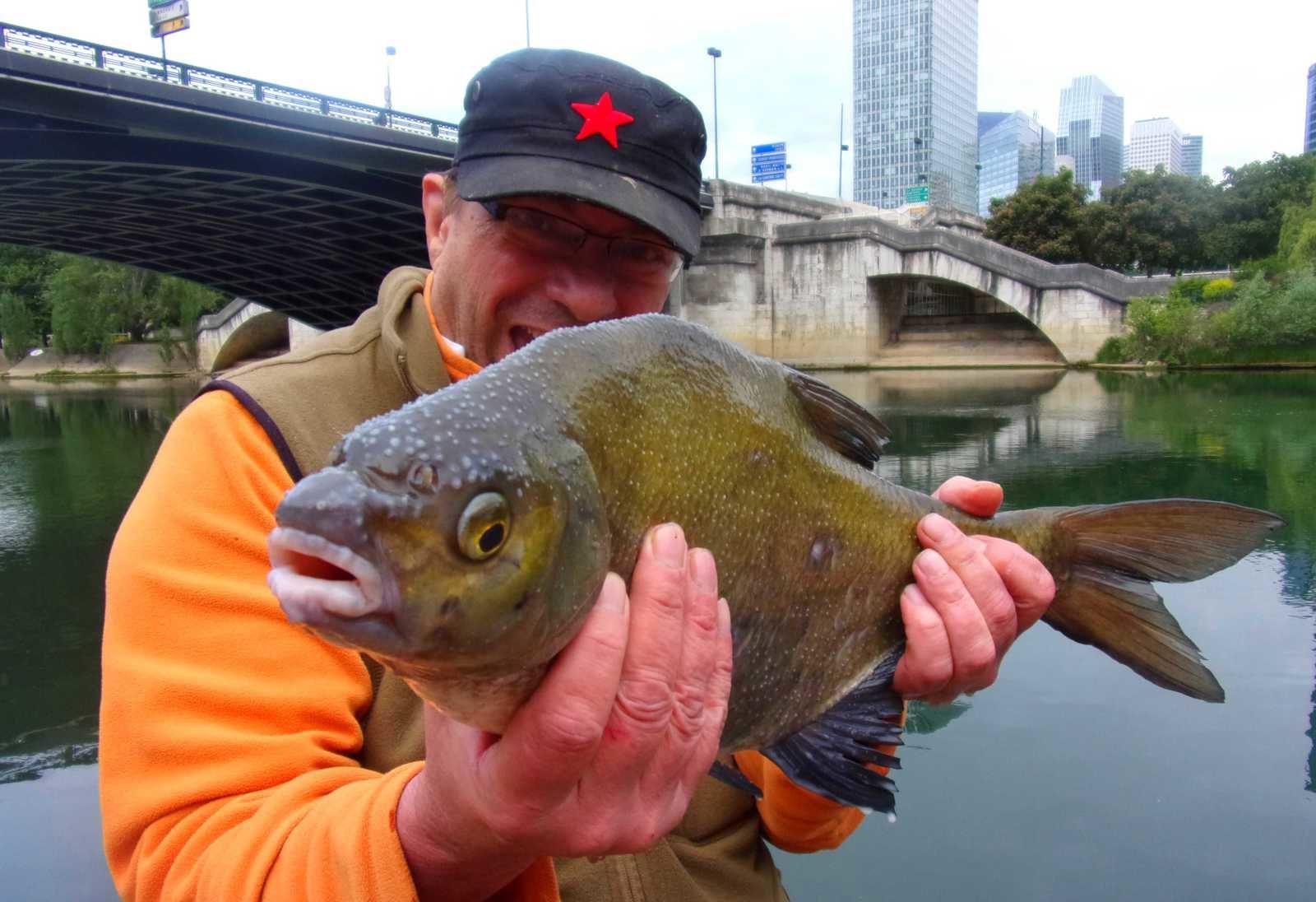 le joli mois de Mai , du fishs avec de la chinoiserie ! (photos et vidéos)