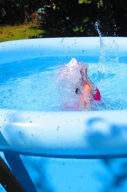 bien entendu la piscine est de rigueur ! et cette semaine on s'entraîne à devenir un vrai dauphin !