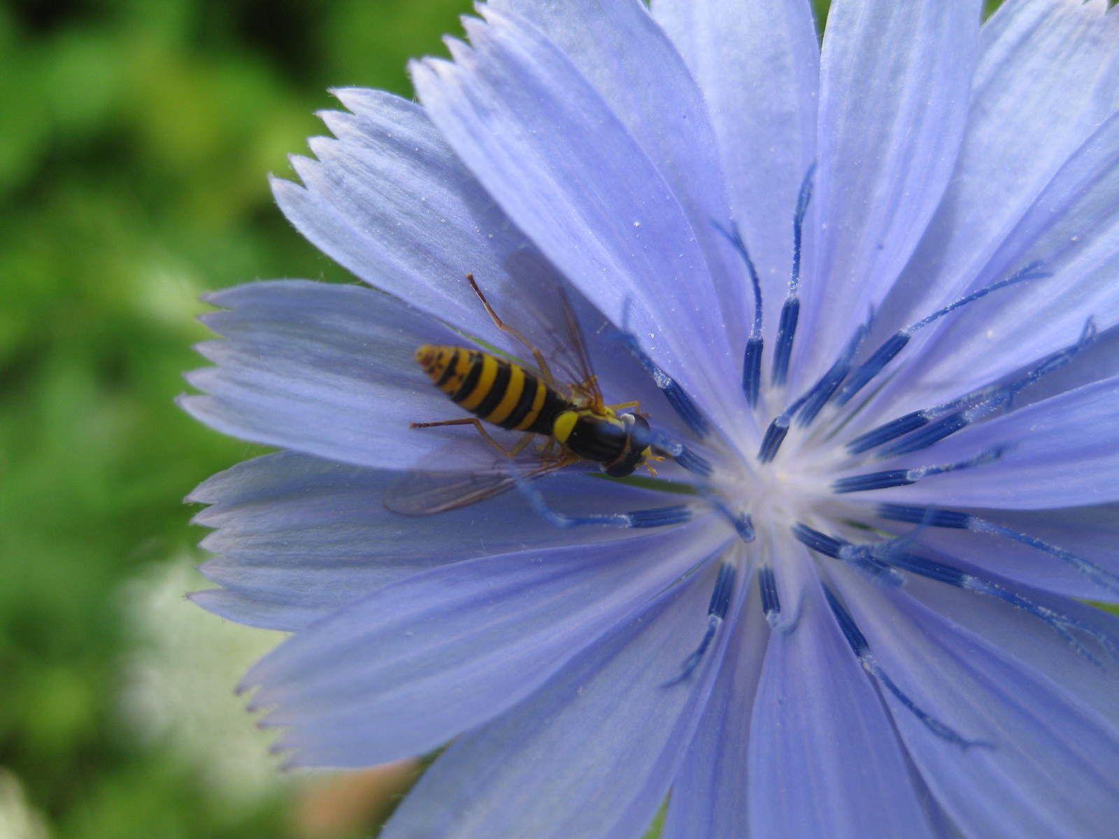 collection :fleurs, insectes et papillons