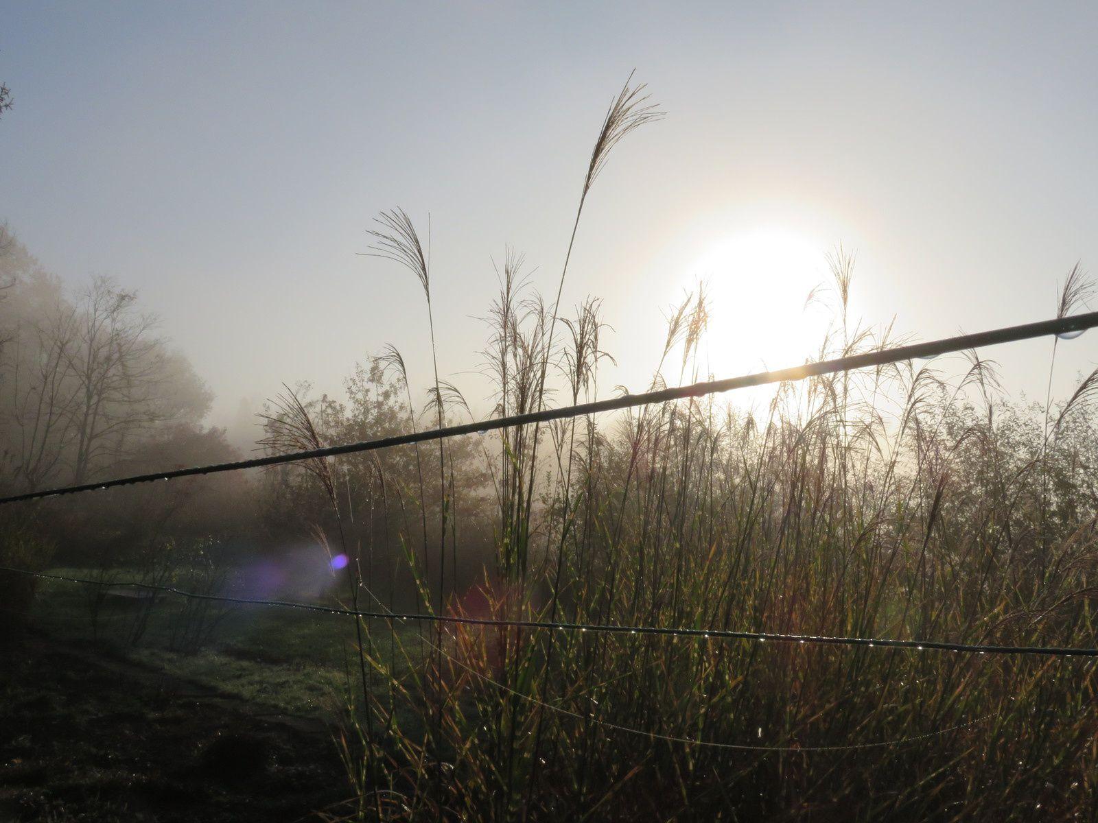 brume et soleil