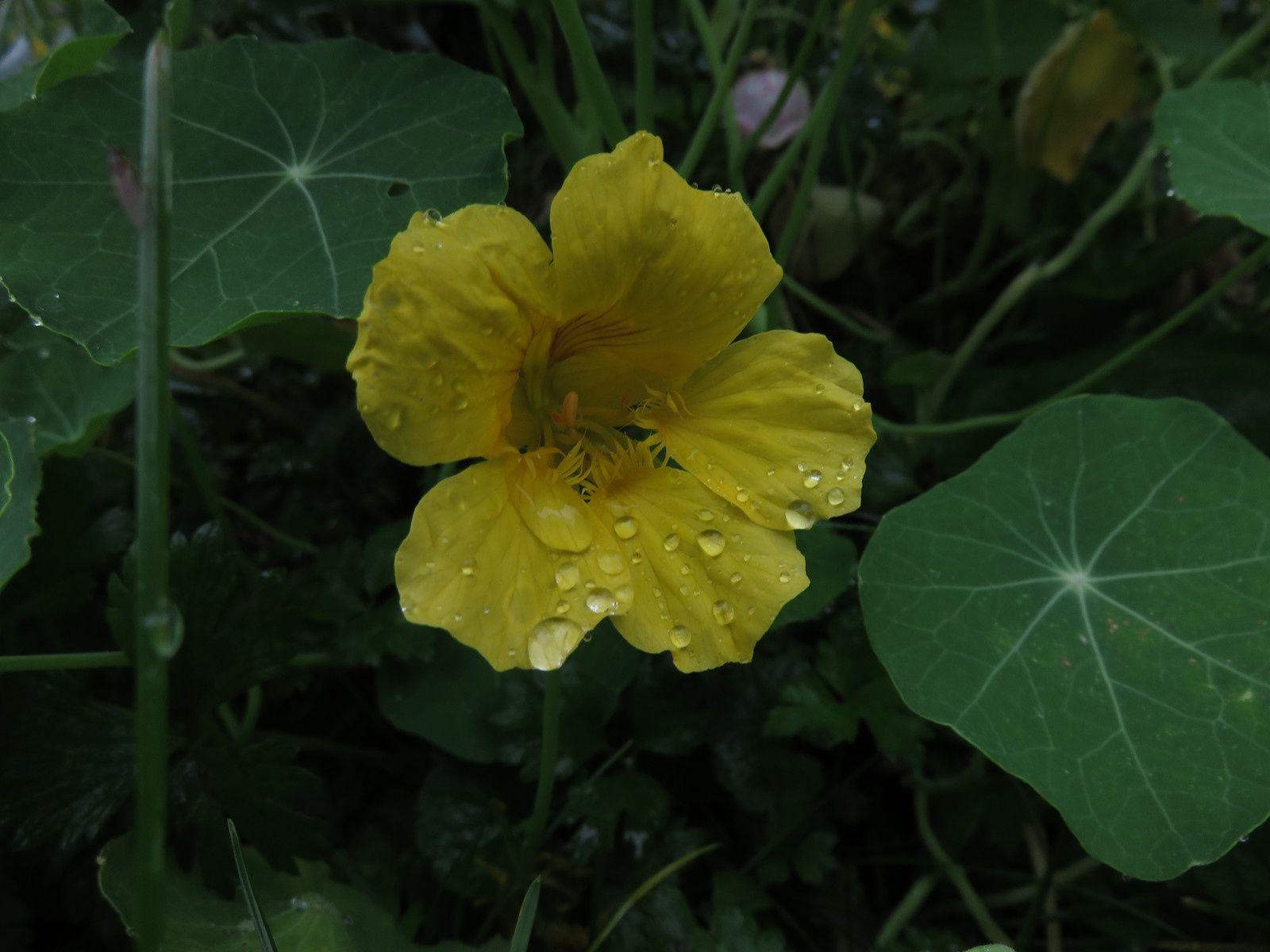 pluie sur le jardin