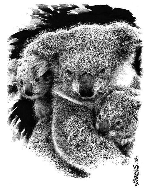 Illustrations animalières