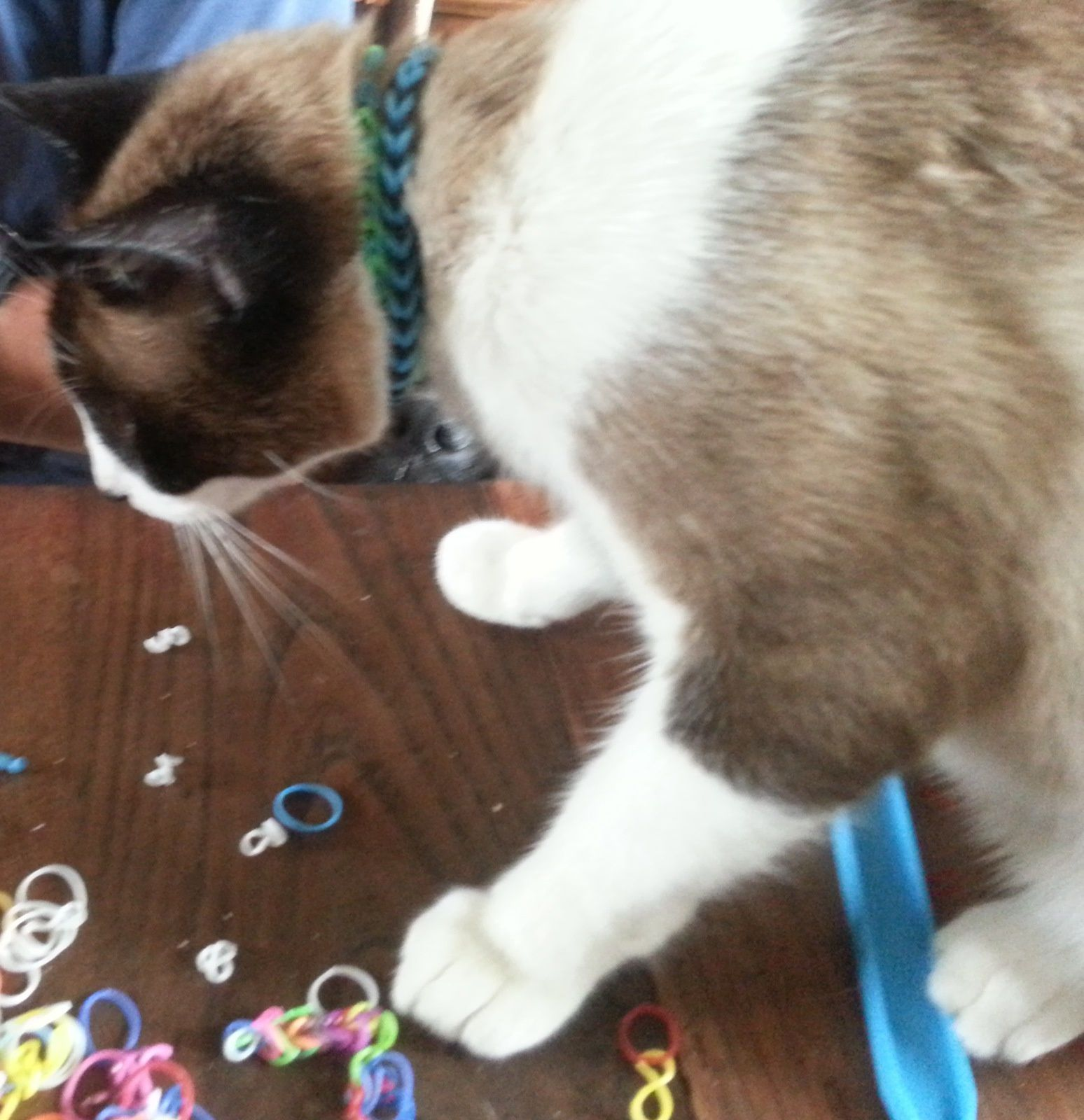 Clarence le chat et les Rainbow loom