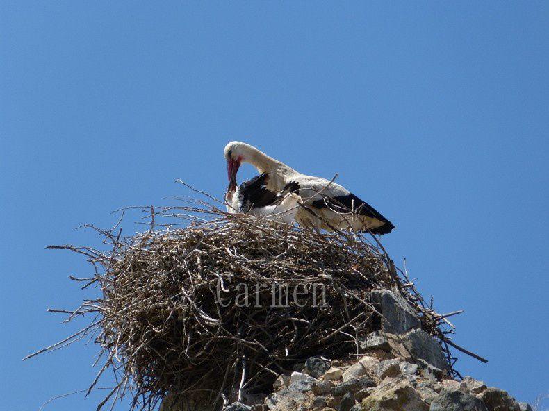Sur la route de l'Extremadura, Merida la splendeur de la Rome Antique
