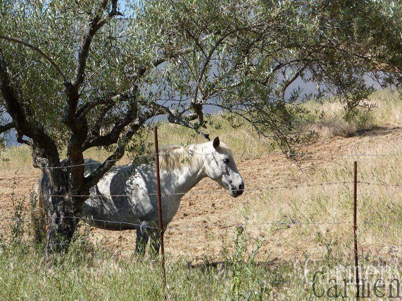 l'Extremadura est l'une des régions les moins peuplées d'Espagne, d'où d'immenses espaces et de paysages naturels où l'on rencontre des taureaux, chevaux, cochons noirs, anes et cigognes.