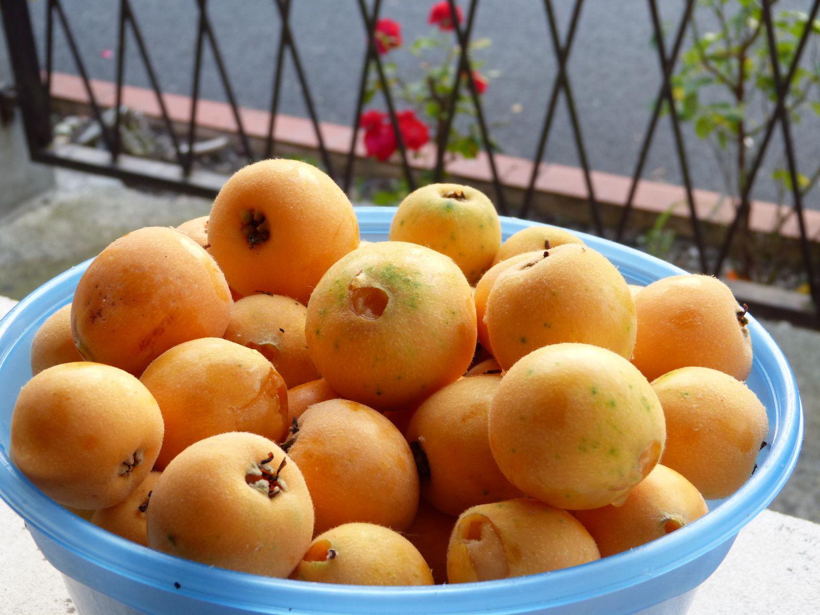 Le néflier n'ayant pas souffert des gelées cette année est hyper chargé de fruits pour notre plus grand plaisir